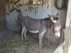 Lotzorai Cortiggias: Donkey